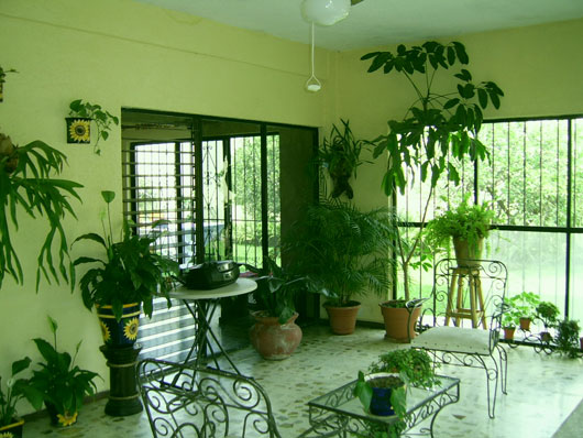 Image of: Room Interior Design with The Plant Into a Room view lounge