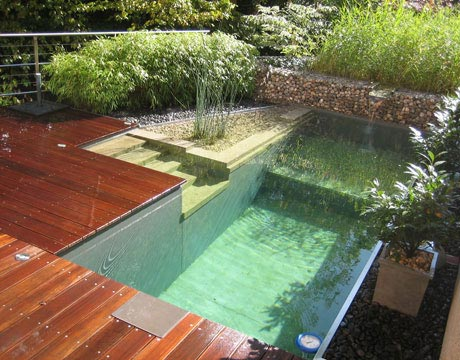 Image of: Awesome Natural Swimming Pool