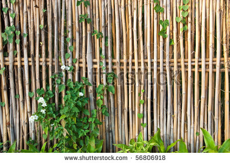 Image of: Bamboo for Good and Private Fence