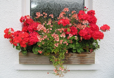Gorgeous Window Box Idea