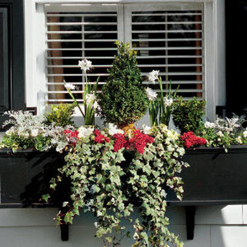 Gorgeous Window Flower Box