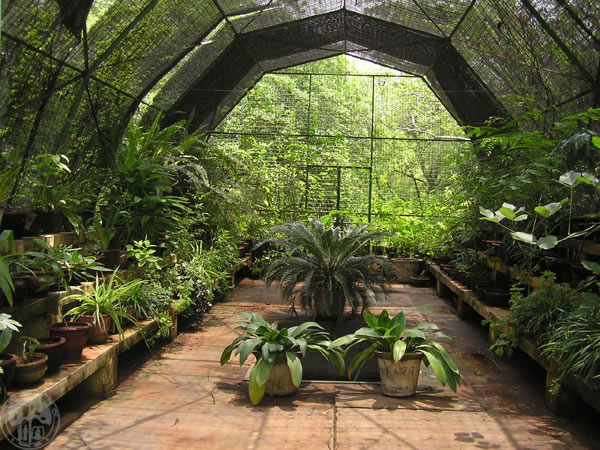 Image of: Greenhouse Ideas