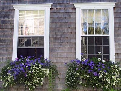 Image of: Idea for Window Boxes
