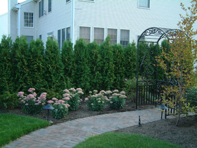 Image of: Plants for Fences