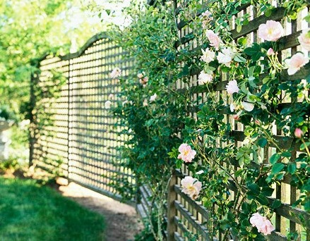 Image of: Privacy Planting Fence Design
