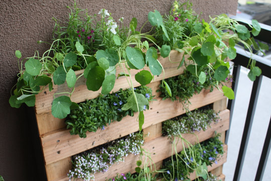 Image of: Small Space Pallet Garden
