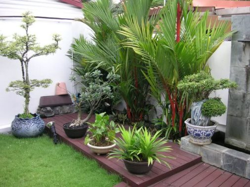 Image of: Small Terracce Garden