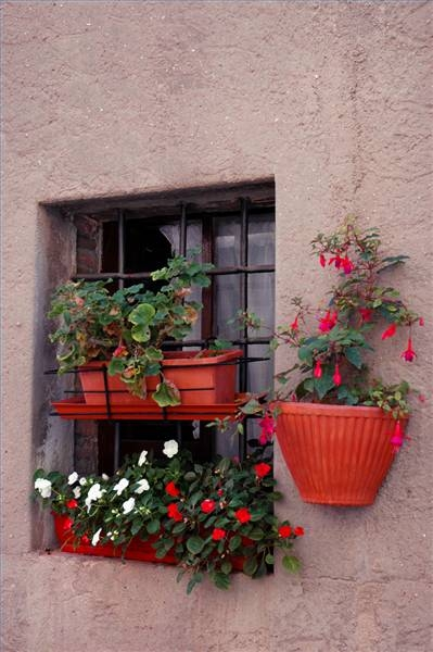 Image of: Window Box Decorating Idea