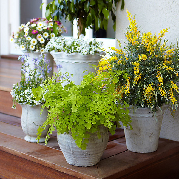 Image of: Beautiful Potted Plants