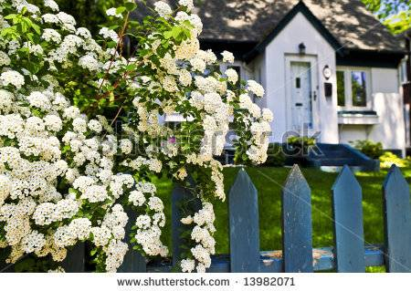 Image of: Flowering Living Fence