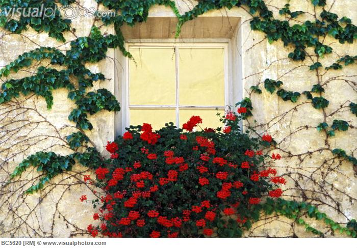 Image of: Flowers around a Window