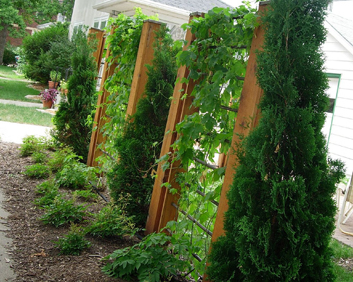 Image of: Plant Fence Idea for Garden