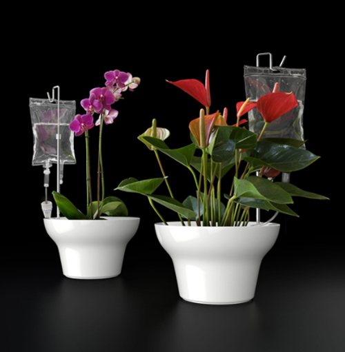 Image of: Self Watering Potted Plants