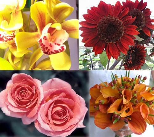 Image of: Types of Flowers
