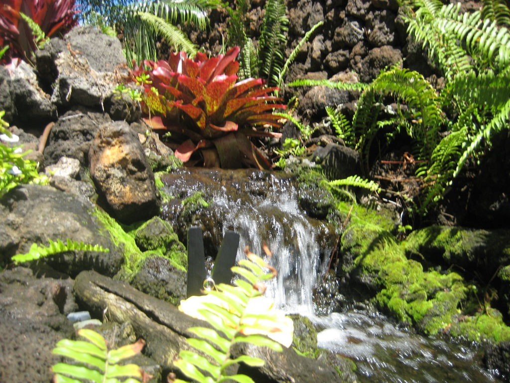 Image of: New Tropical Plants Waterfall