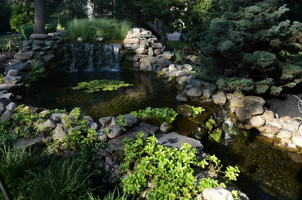 Image of: Tropical Plants Waterfall