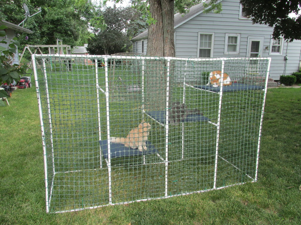 Beauty Cat Fence