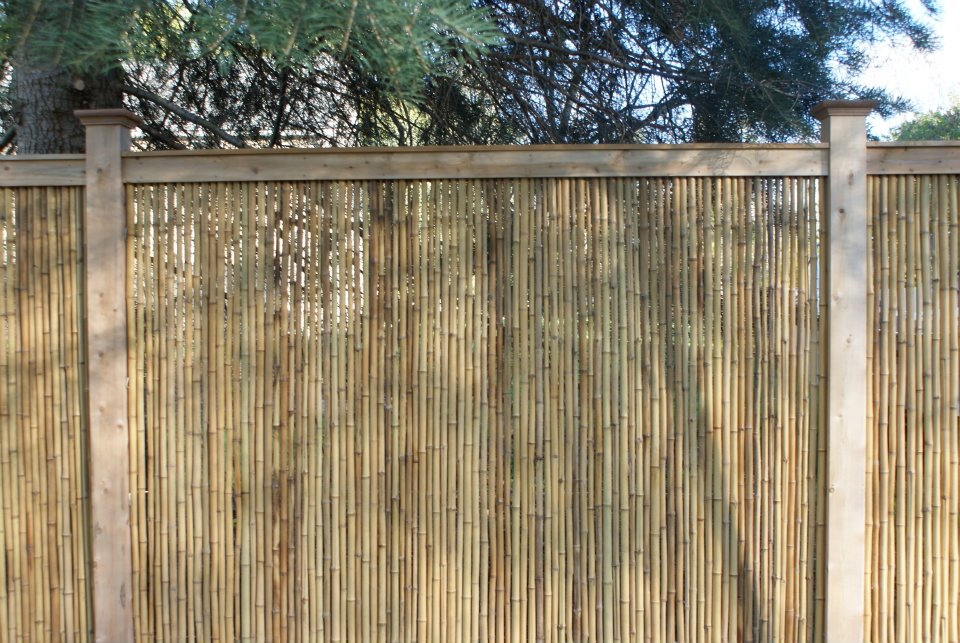 Image of: Best Bamboo Fencing Rolls
