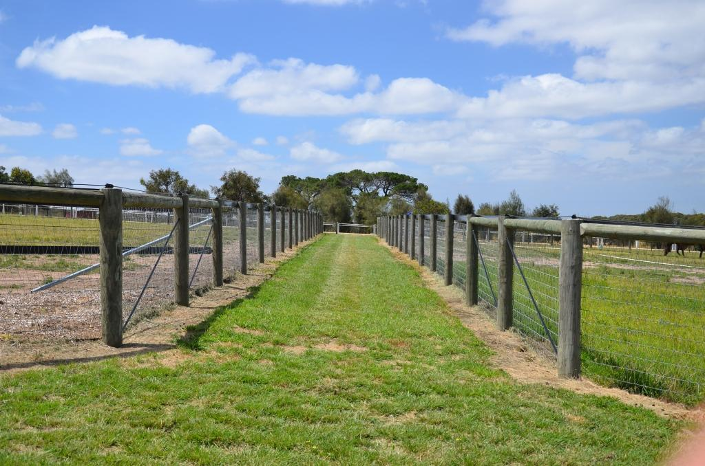 Brown Horse Fencing