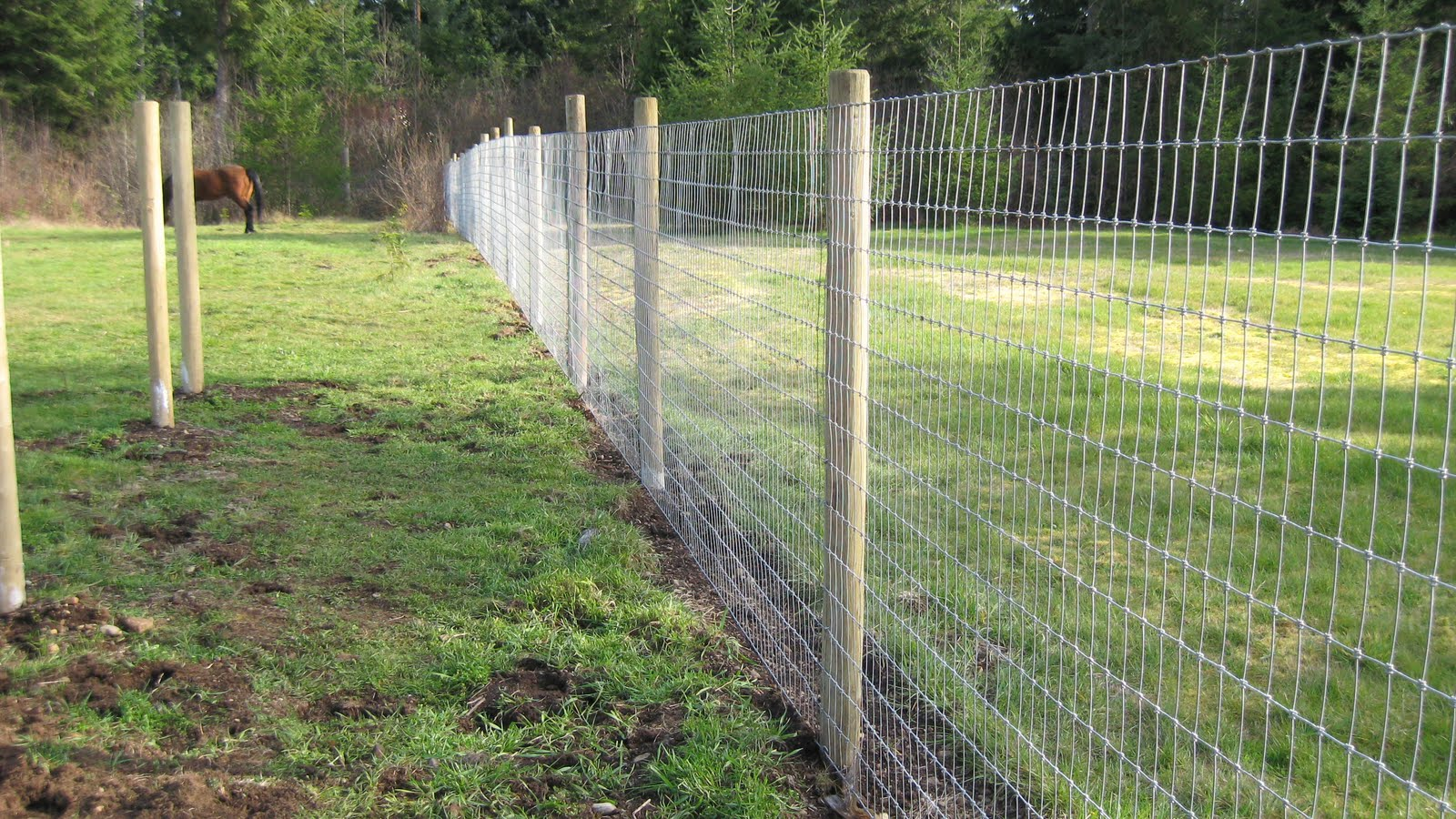 Chrome Horse Fencing