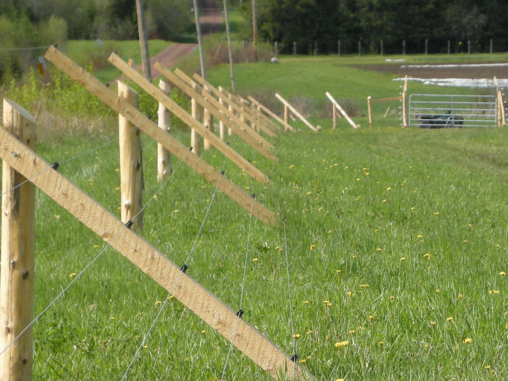 Image of: Deer Fences Idea