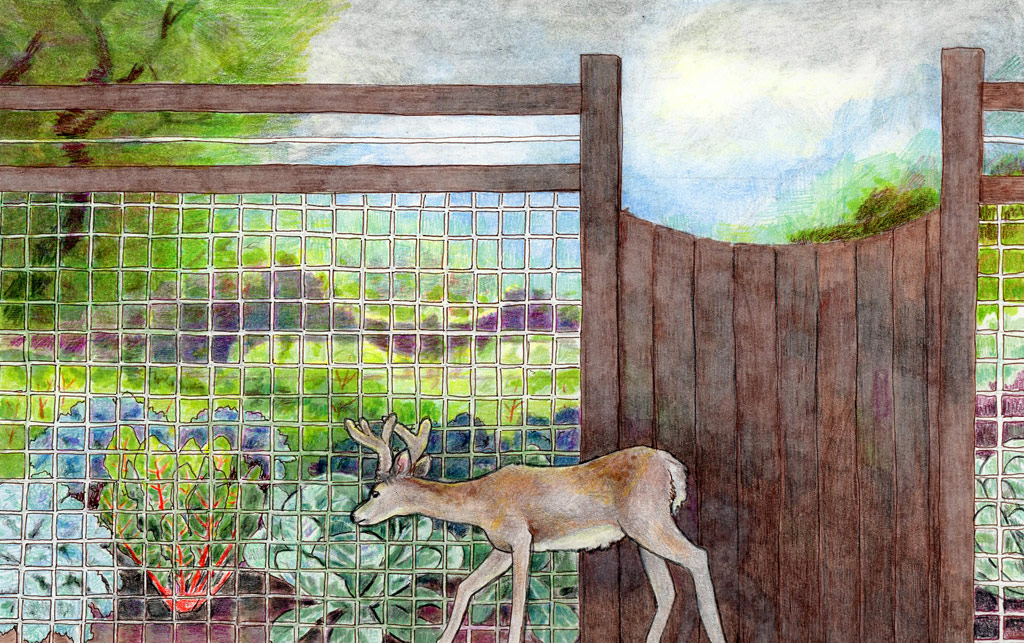 Deer Fencing Design