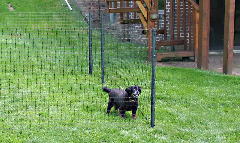 Image of: Elegant Dog Fence