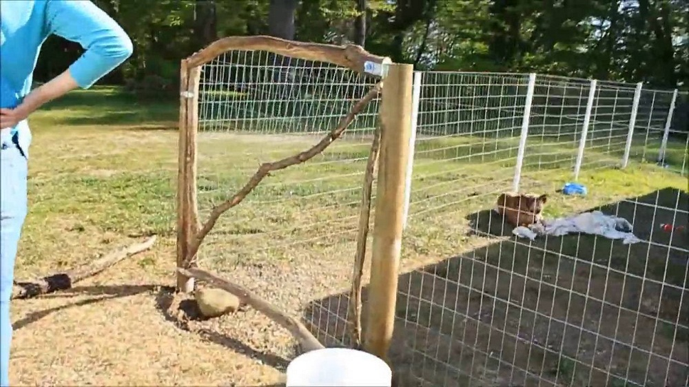 Image of: Favorite Dog Fence