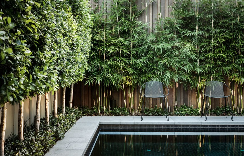 Image of: Fence Privacy Screen Plants