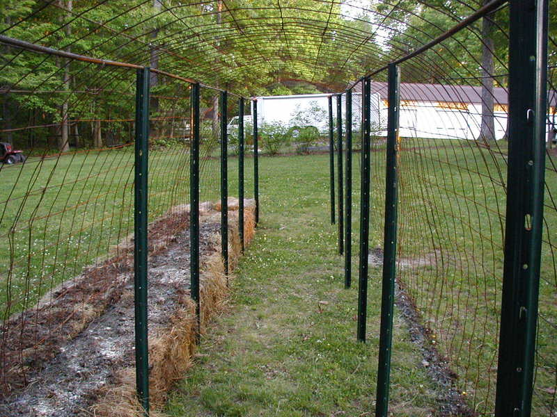 Image of: Garden Metal Fence Posts