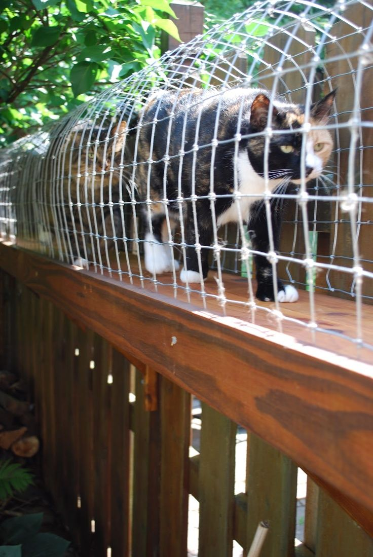 Image of: Halway Cat Fence