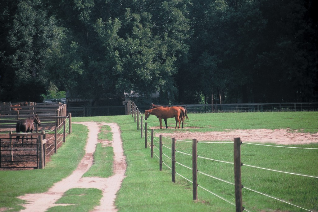 Image of: Horse Fence Options