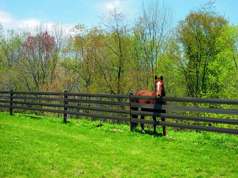 Image of: Horse Fence Paint