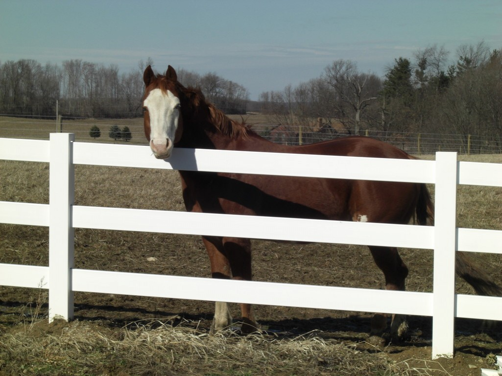 Image of: Horse Fence Vinly