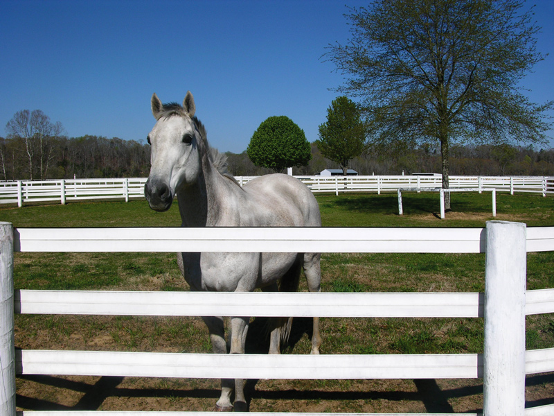 Image of: Horse Fence White