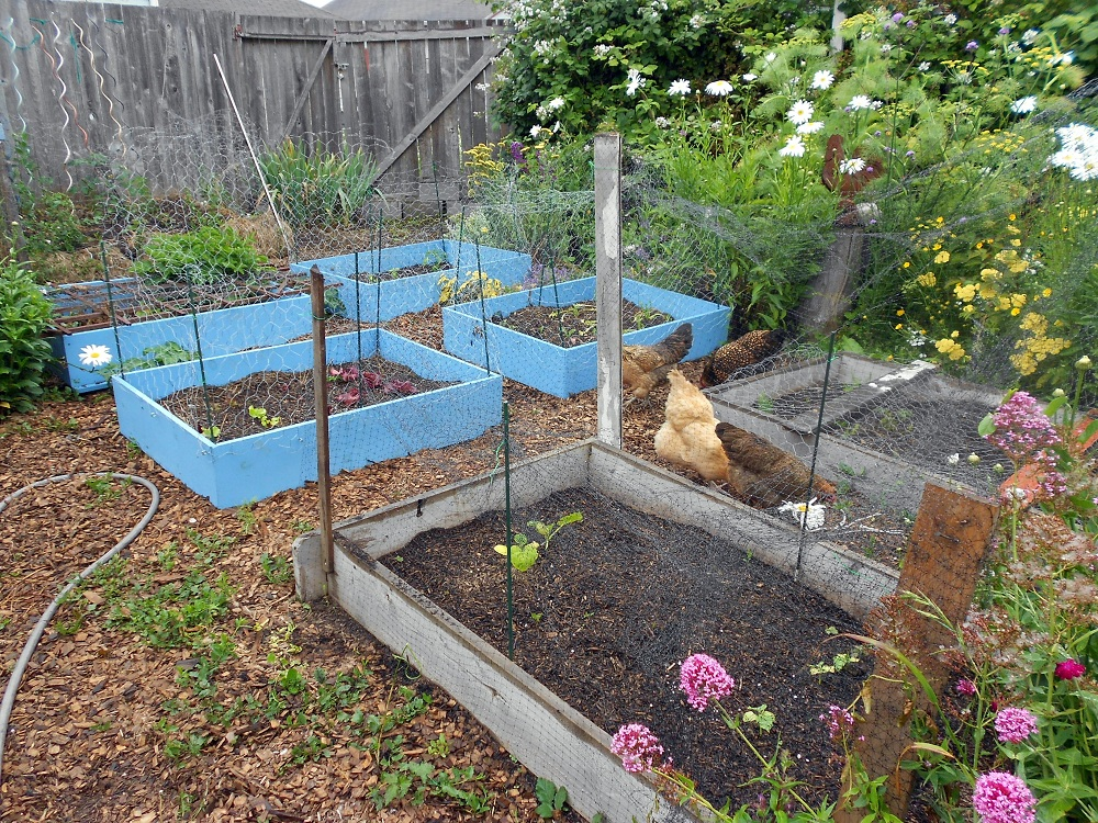 Ideal Chicken Wire Fence
