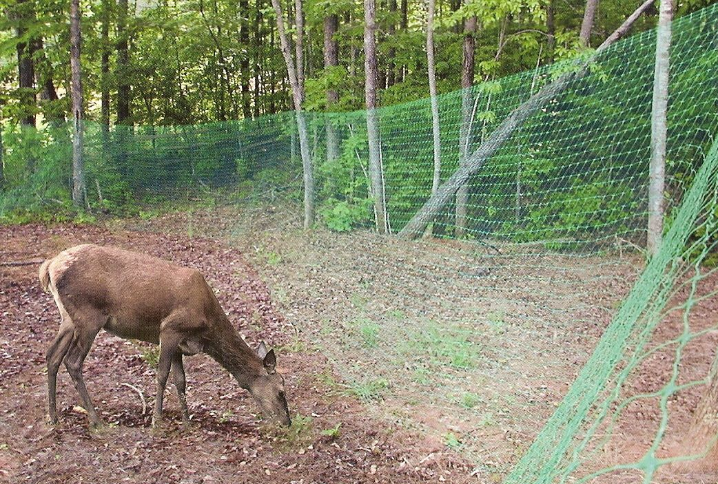 Image of: Inexpensive Deer Fences