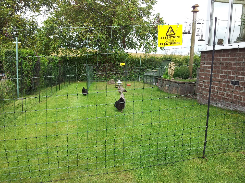 Image of: Large Chicken Wire Fence