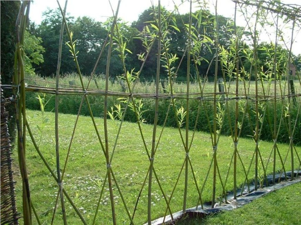 Image of: Living Fence Ideas