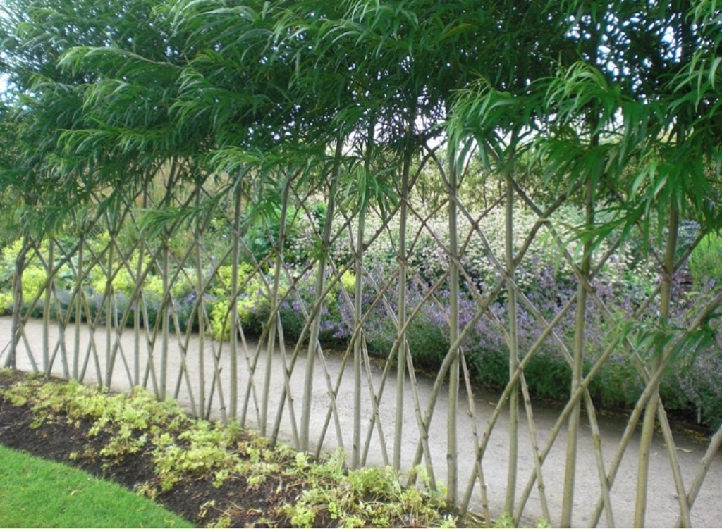 Image of: Living Fence Panels