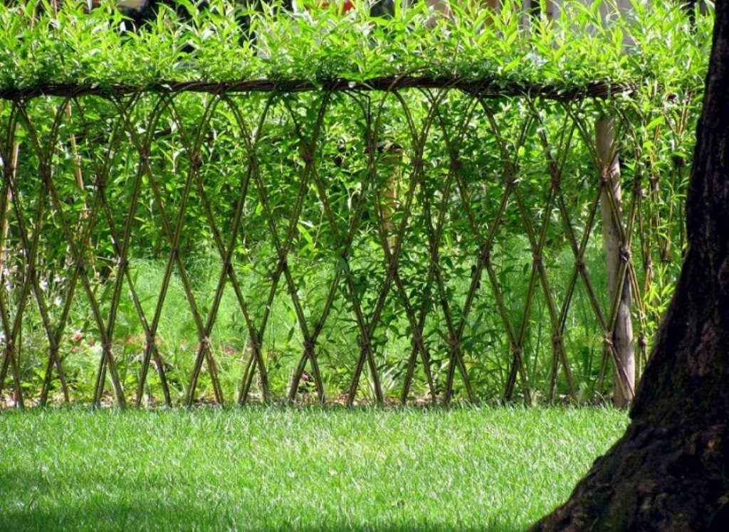 Image of: Living Fence Supplies