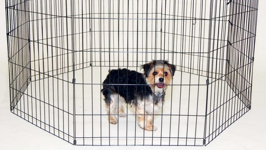 Image of: Portable Dog Fence Ideas