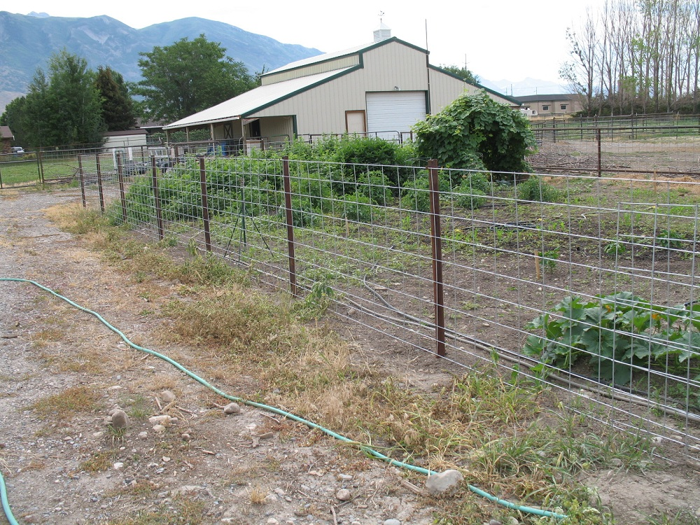 Simple Chicken Wire Fence