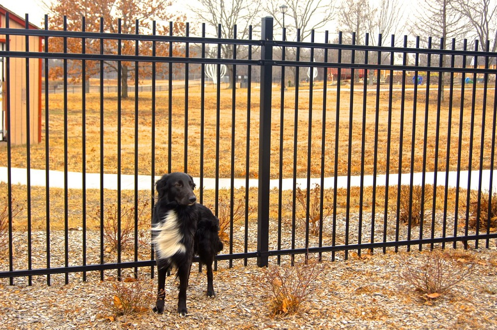 Image of: Vertical Dog Fence