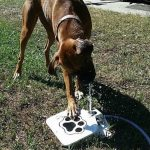 Automatic Dog Water Fountain Kits
