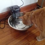 Battery Powered Cat Drinking Fountain