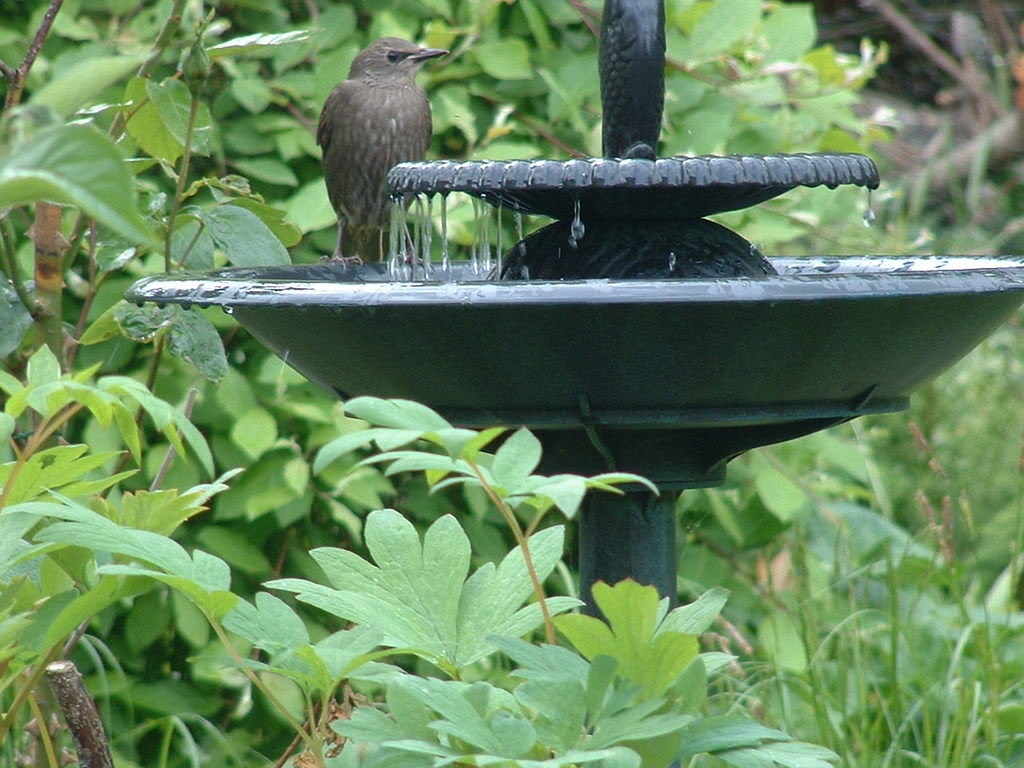 Image of: Bird Bath Fountain Pump