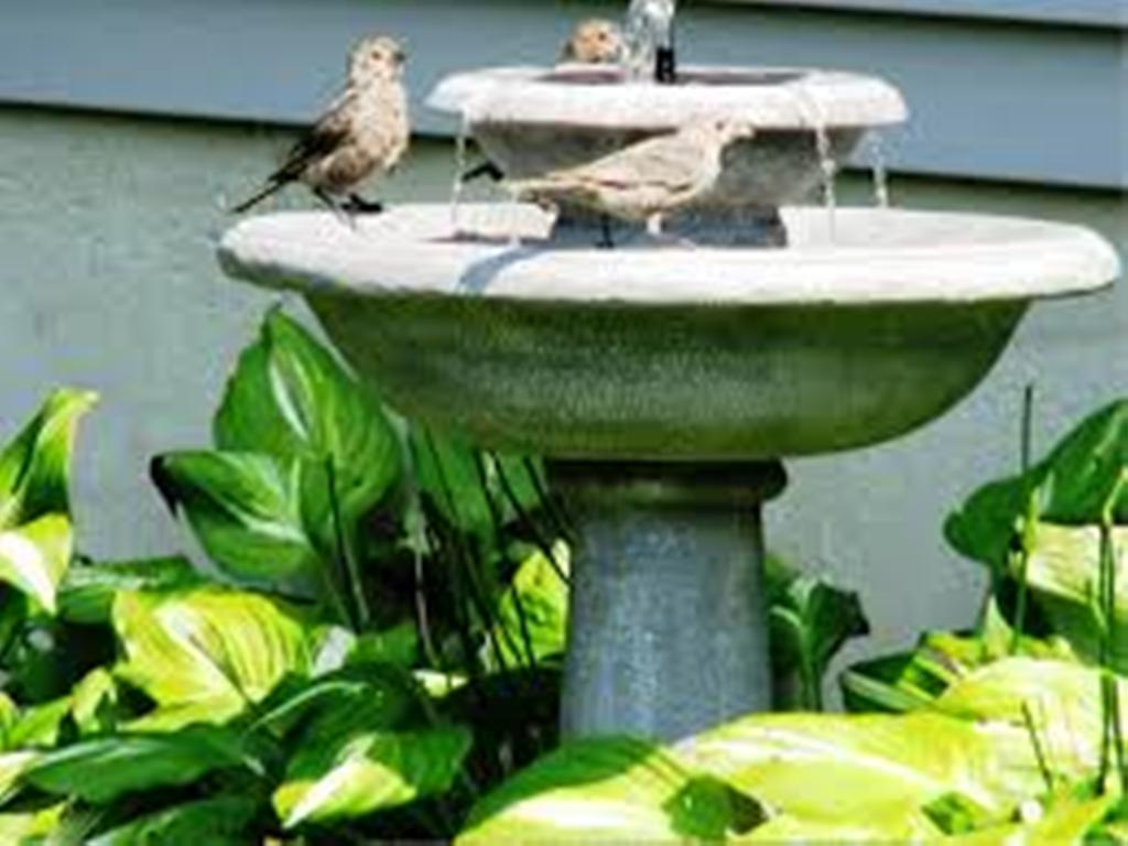 Image of: Bird Bath Fountain Solar Reviews