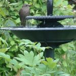 Bird Fountains Baths