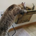 Cat Drinking Fountain Battery Operated